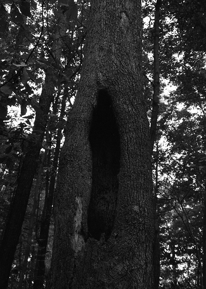Treehollow, Hampton